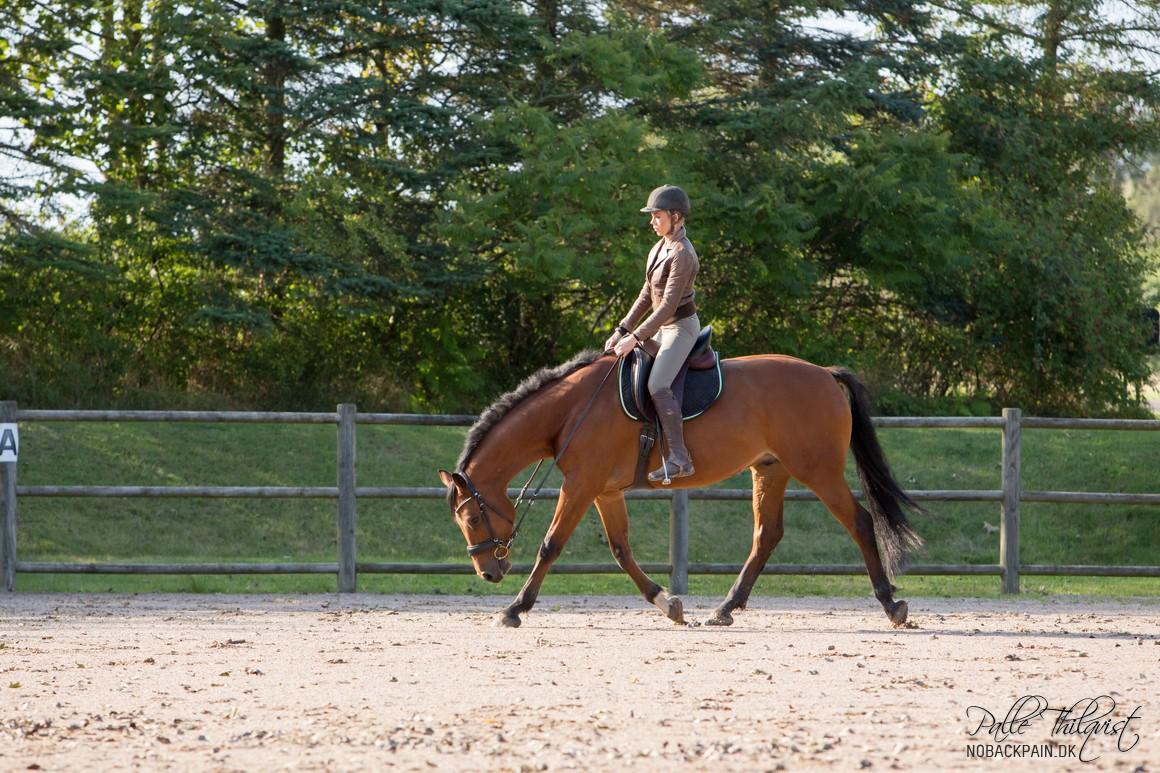Hesten her er ikke i en fri trav. Men læg mærke til hvor ens det diagonale benpar bevæger sig. Sådan bør det være uanset om hesten er i fri trav eller arbejdstrav.
