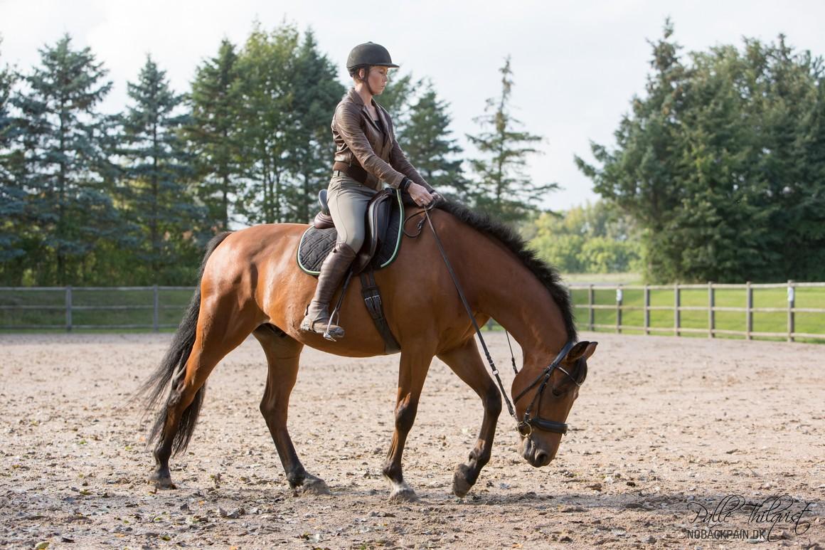 Når hesten begynder at strække sig stabilt i longen, så vil den højst sandsynligt også rimeligt hurtigt begynde at gøre det når du rider.