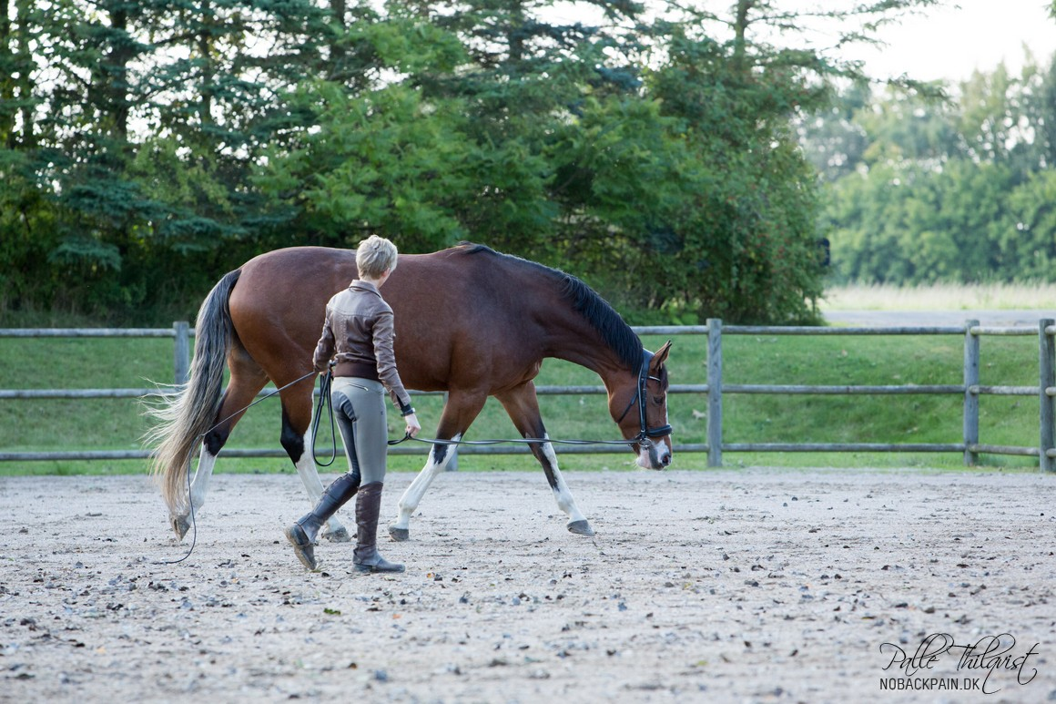 Stacia is trotting relaxed and stretches down and forward.