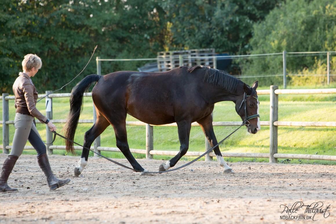 Man skulle gerne se at hesten begynder at løfte i området omkring manken. Dette vil føre til at hesten flytter vægten længere bagud og dermed væk fra forparten.