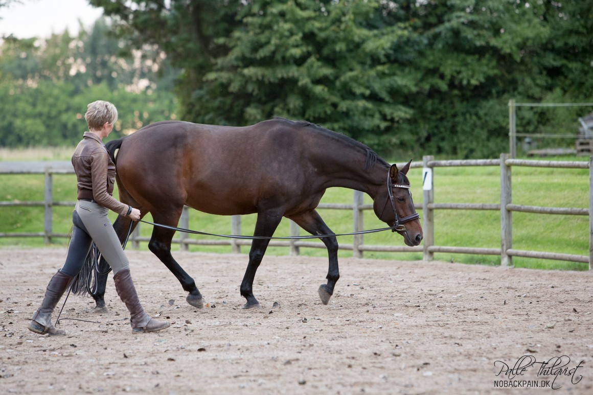 Har man en hest som Amaze med kissing spine, så er longeringen fantastsik til at opbygge en stærk rygmuskulatur.