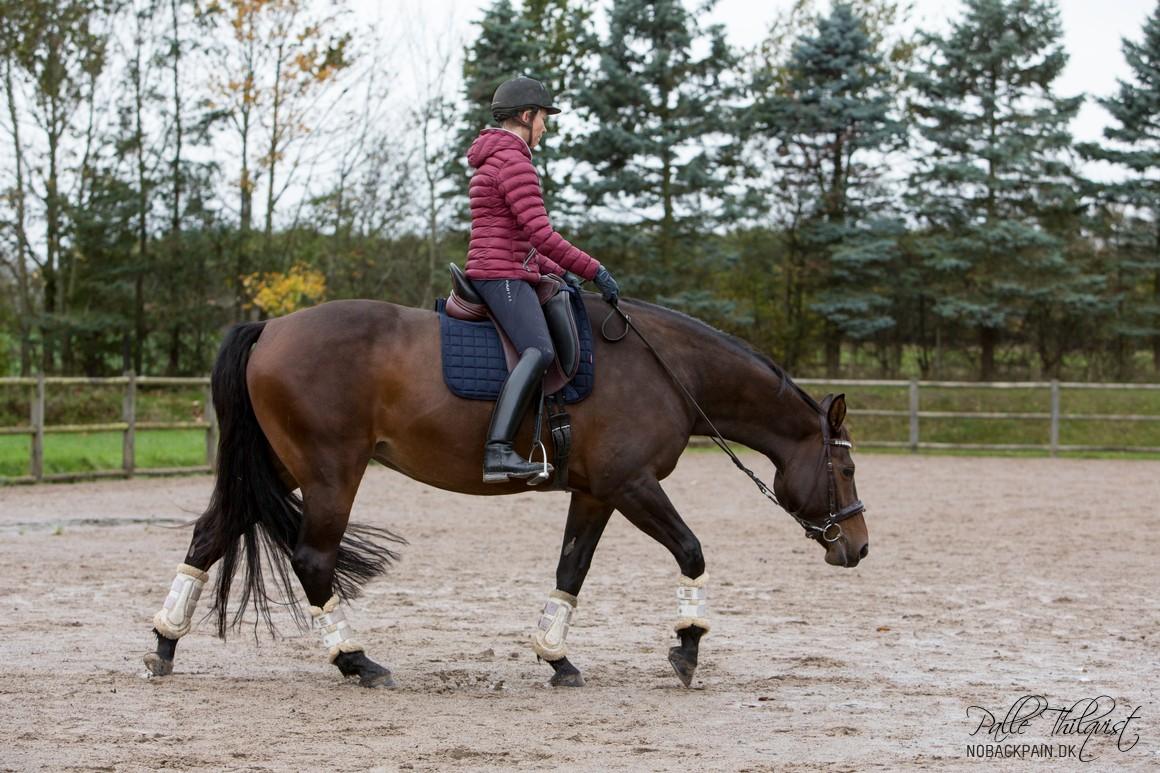 Her kan man se hvordan benet skal føres tilbage helt oppe fra hoften. Men når hesten ikke er mere rundet end i dette tilfælde, så er det ikke særligt meget benet skal føres tilbage.