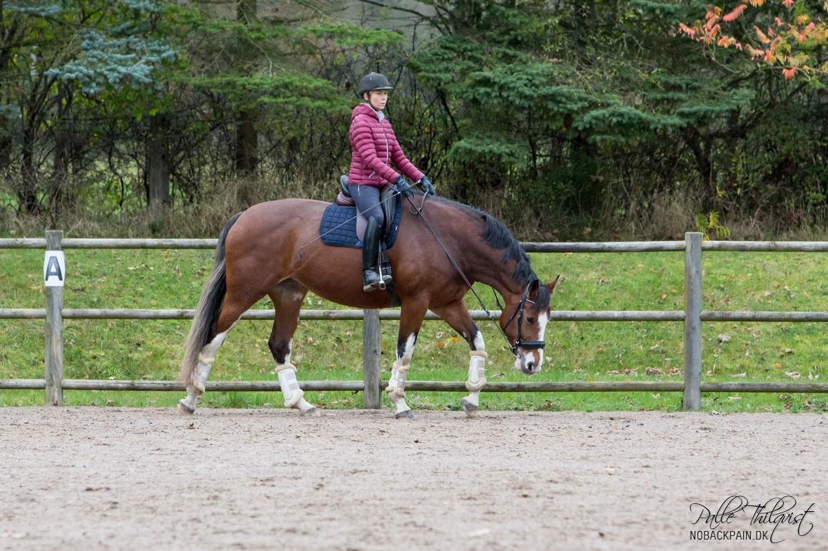 Skridtarbejdet er fantastisk til at gøre hestens overlinje stærkere. Og det er lige så fantastisk for rytteren. For i denne gangart er det meget nemmere at rette på sig selv.