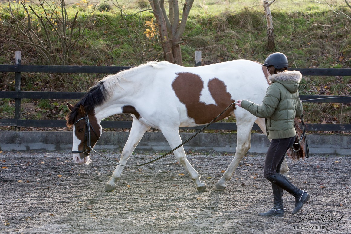 This is Stine's first time working absinthe long way this way. It will take some time before you can see his back lift, but because he stretches as he does, he has the opportunity to swing his hind legs reasonably sensibly. Good work in two :)