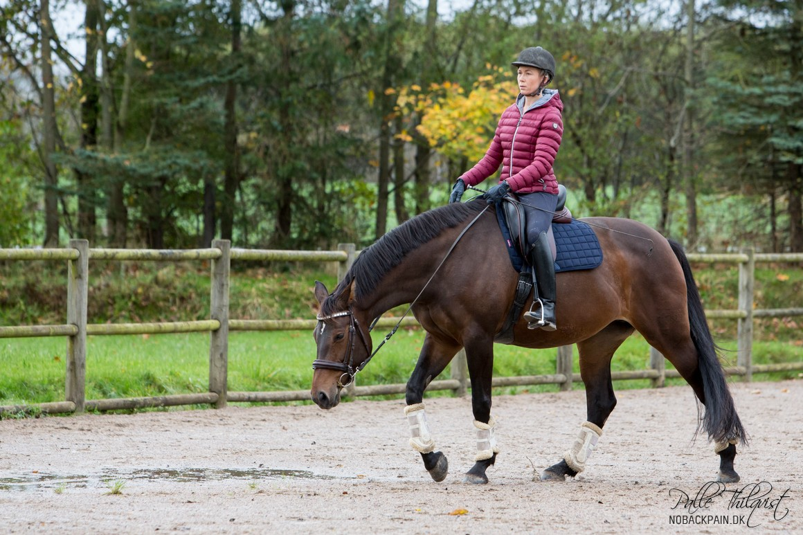 This year we have managed to get Amaze back as a riding horse. It's a very slow process, but it's always going forward.