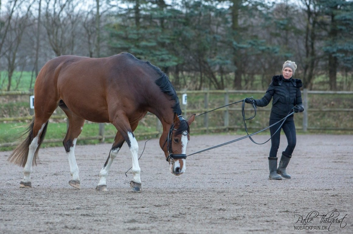 How do you get the horse to stretch in the lunge?