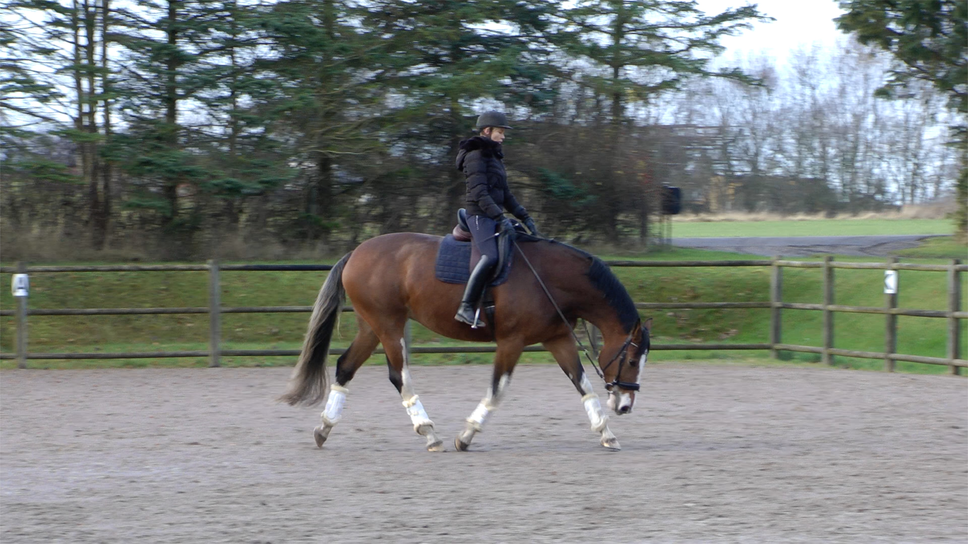 Here you can see Stacia in trot. She stretches well below knee height, but is still not very much on the forehand.