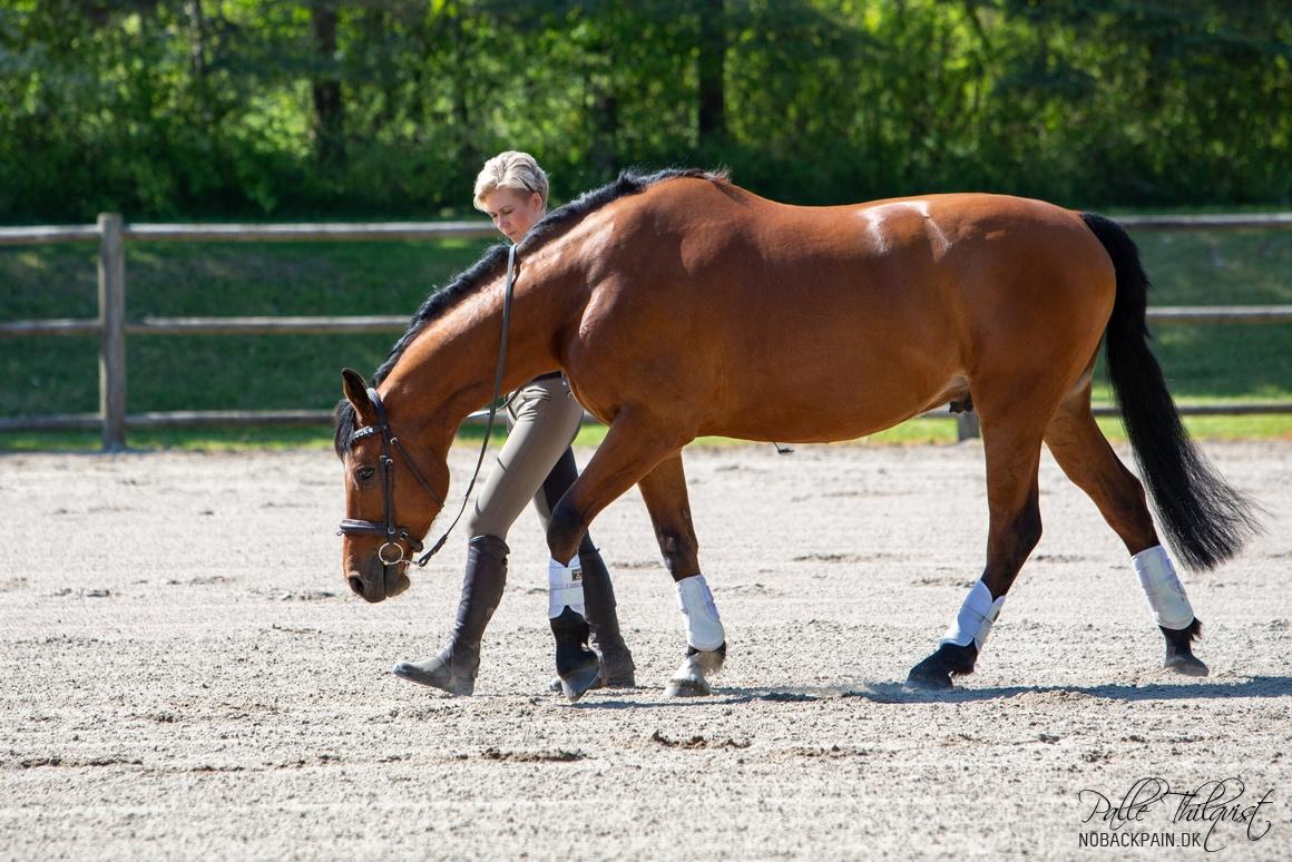 Noller er den af hestene der udvikler sig langsommest. Tror det skyldes hans kropsbygning og temperament. Der hvor han har udviklet sig mest er området bag skuldrene. Der havde han tidligere fordybninger.