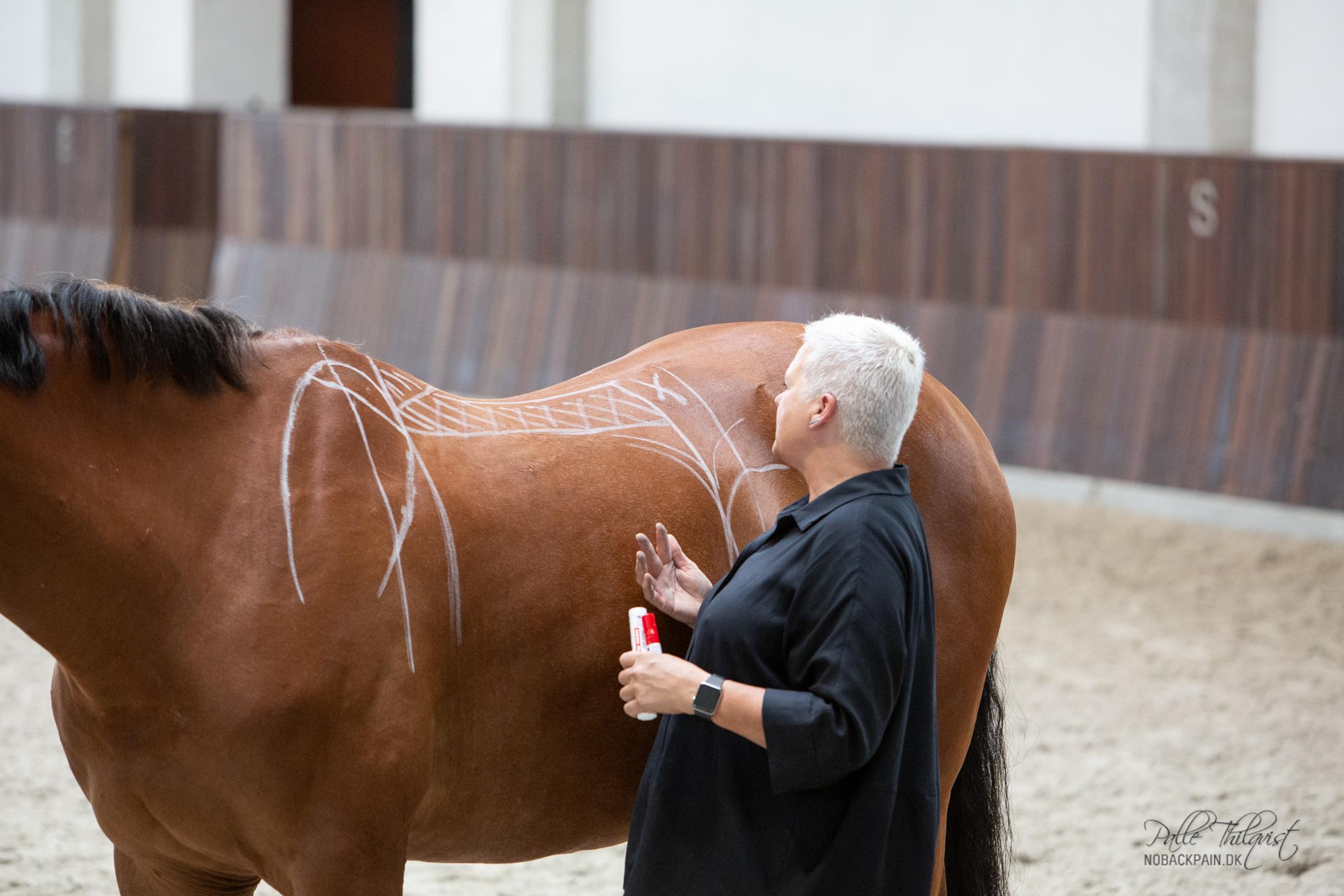 Her ses en skitse af hvor sadlen må hvile på hesten. Kriemhild Morgenroth med hesten Zircon.