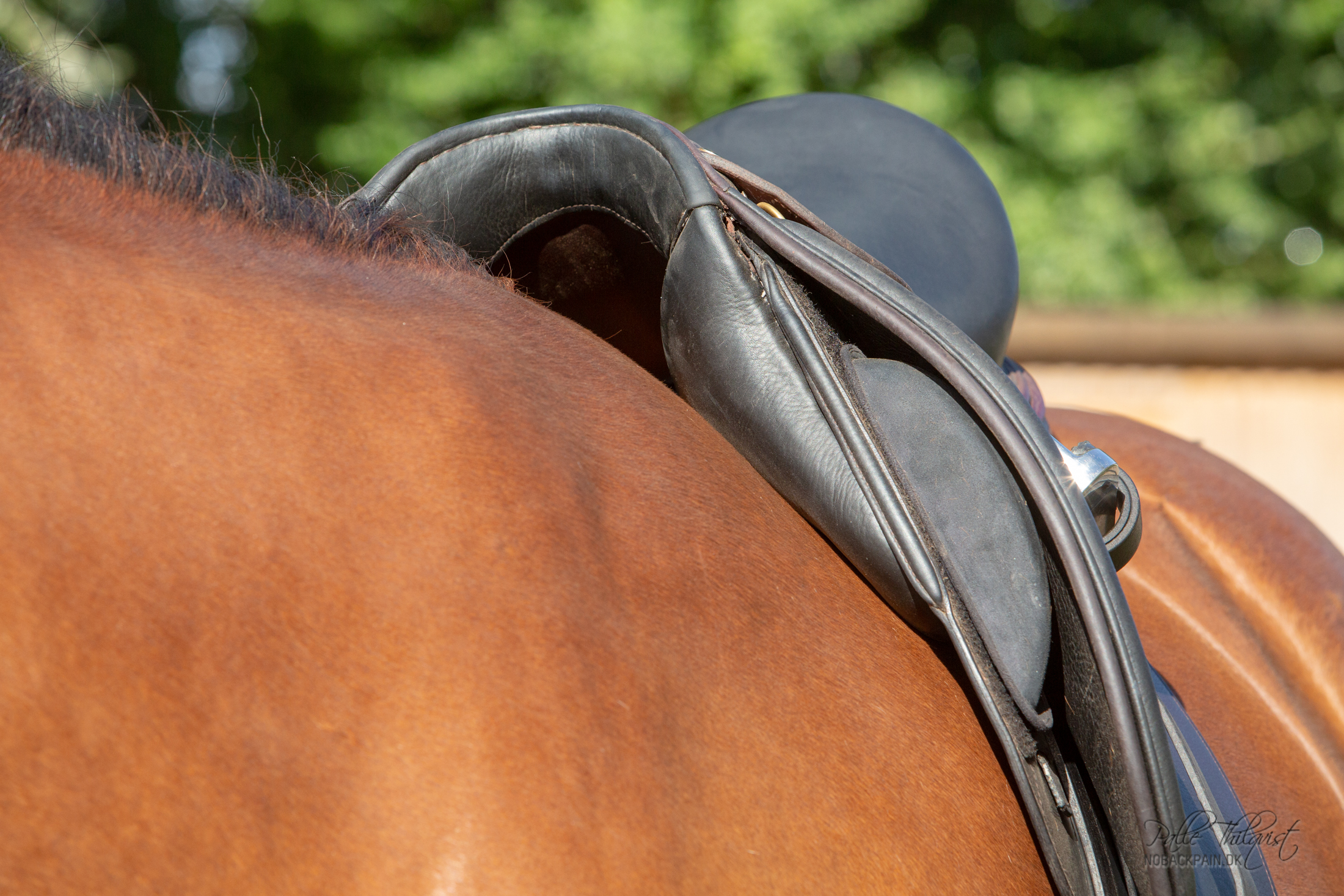 Her kan man se hvor meget plads der skal være rundt om manken for at skulderen kan rotere uhindret.