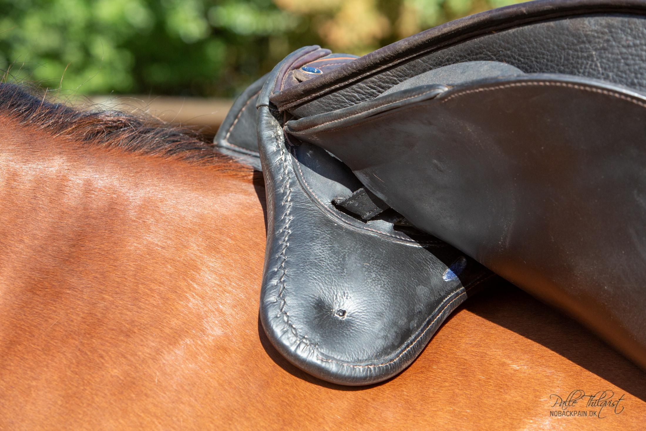 Puden under denne sadel er skåret tilbage for at give skuldermusklen plads.