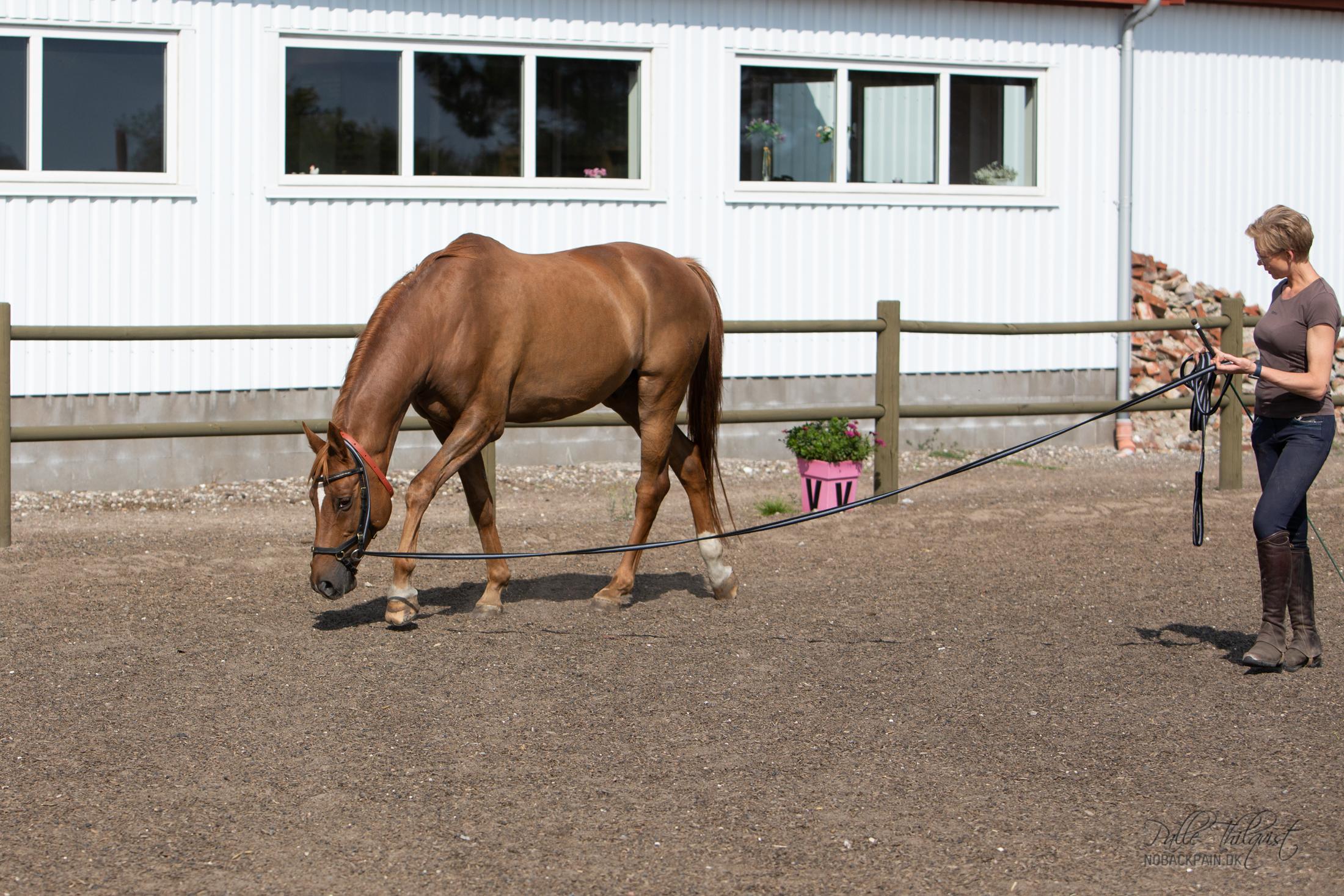 Her ses Pro Firfod første gang gang han arbejdes ud fra A2R principper. Han har ikke været en nem hest. Men han nødt det her og var en drøm at arbejde med.