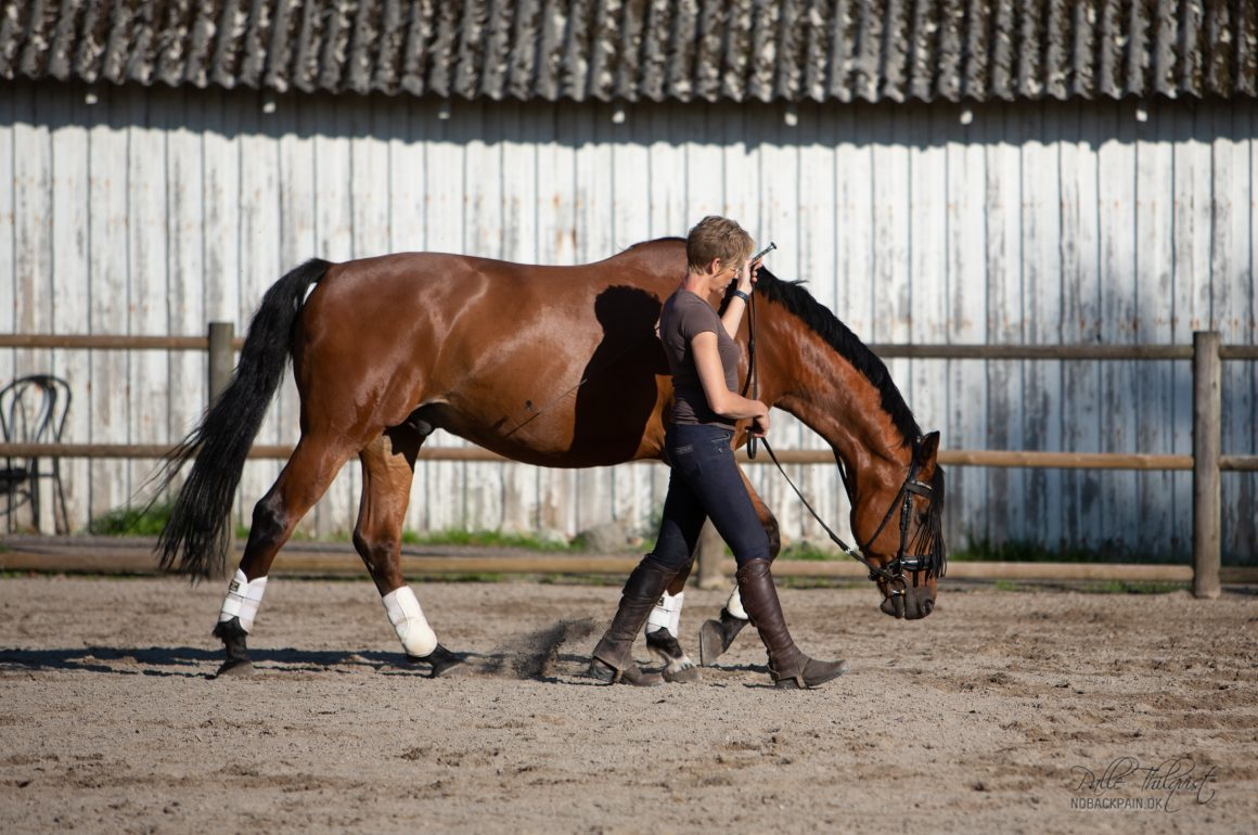How do you start your horse with the work in hand?