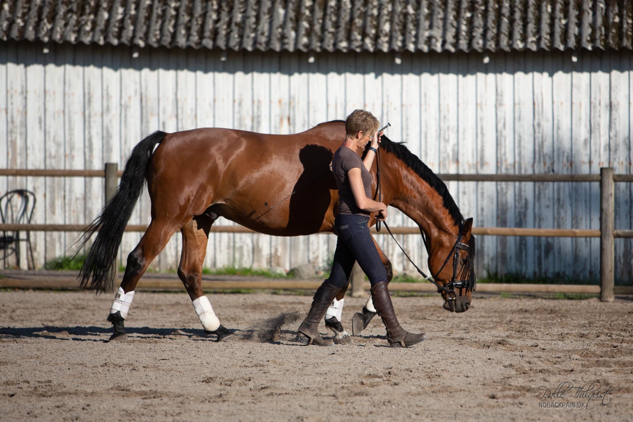 Noller er en hest der har svært ved at slappe af. Den bedste muskelopbygning får jeg via arbejdet fra jorden.