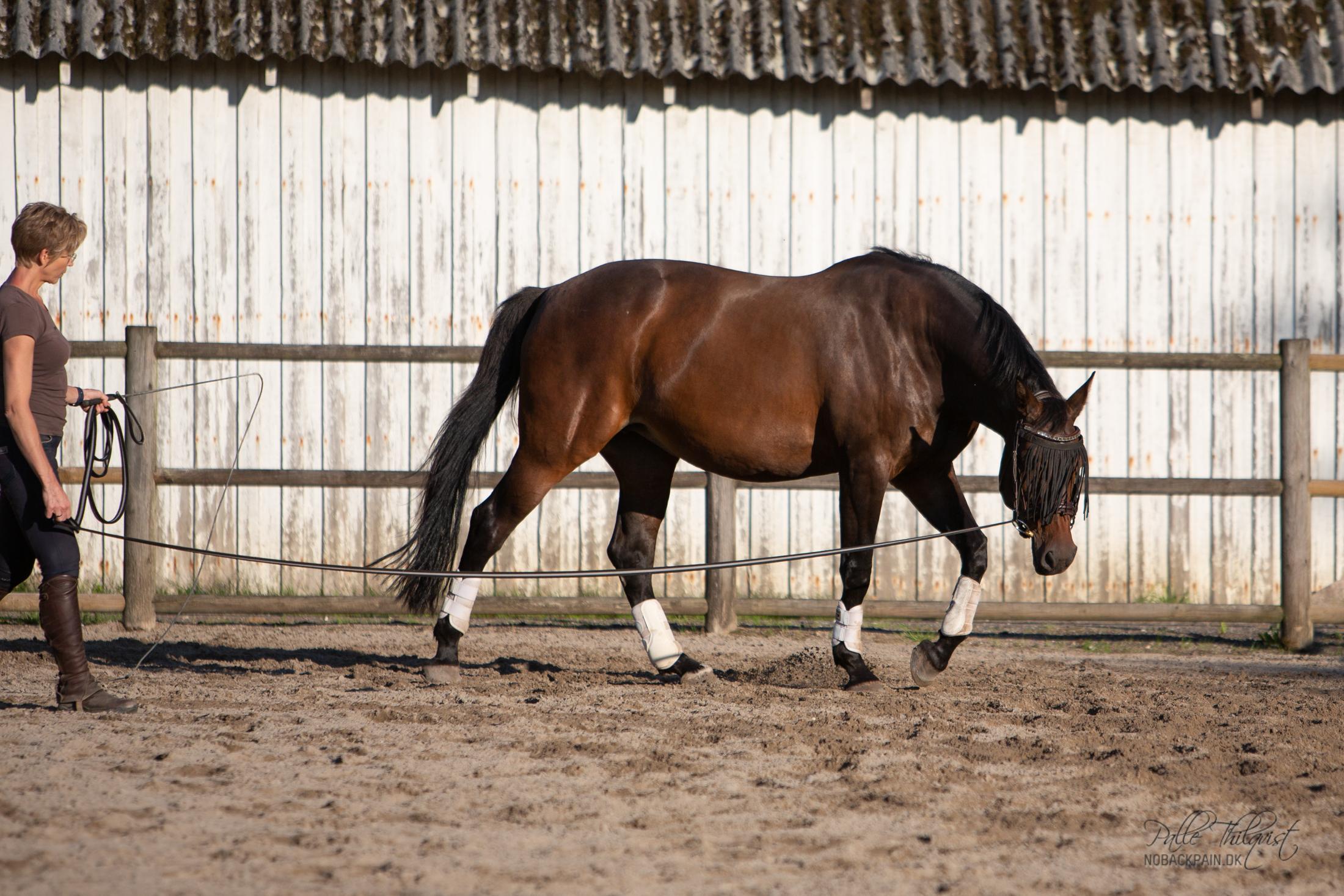 Amaze var en hest der ikke kun gav problemer under ridningen - hun blev direkte farlig.