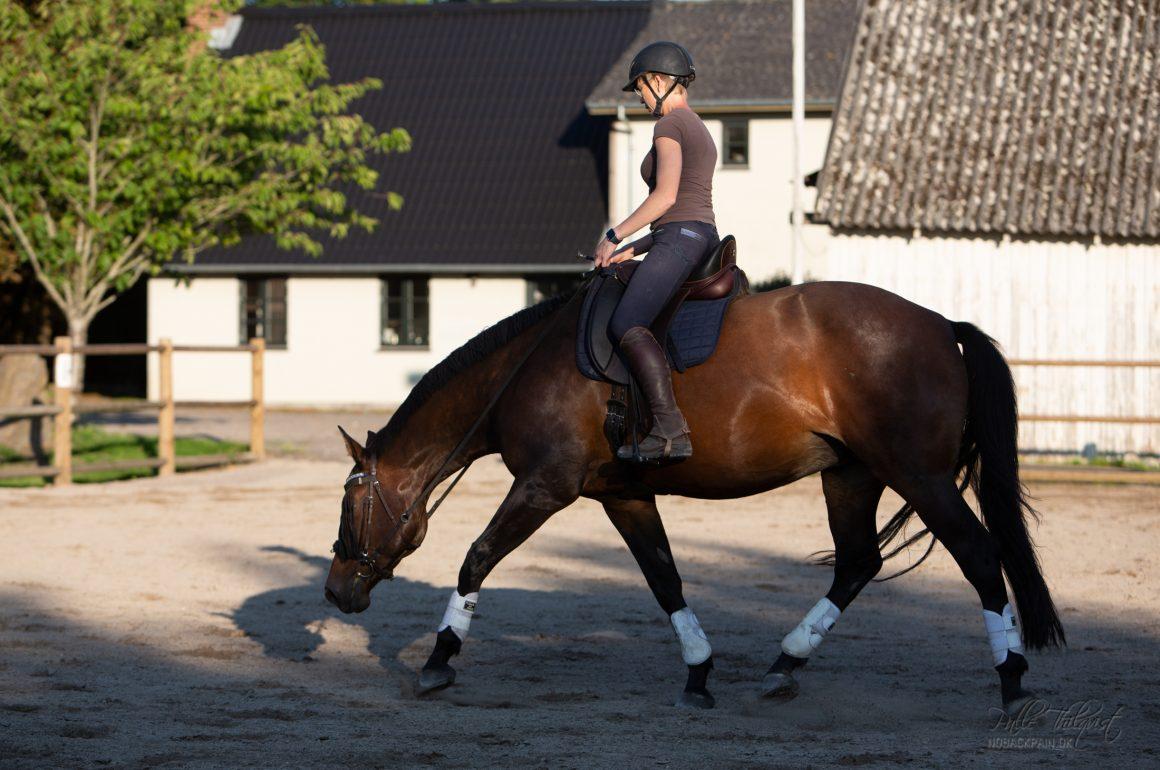 """Det tager lang tid at få hesten stærk nok til at den kan arbejde med en """"løftet"""" ryg når der sidder en rytter på den."""