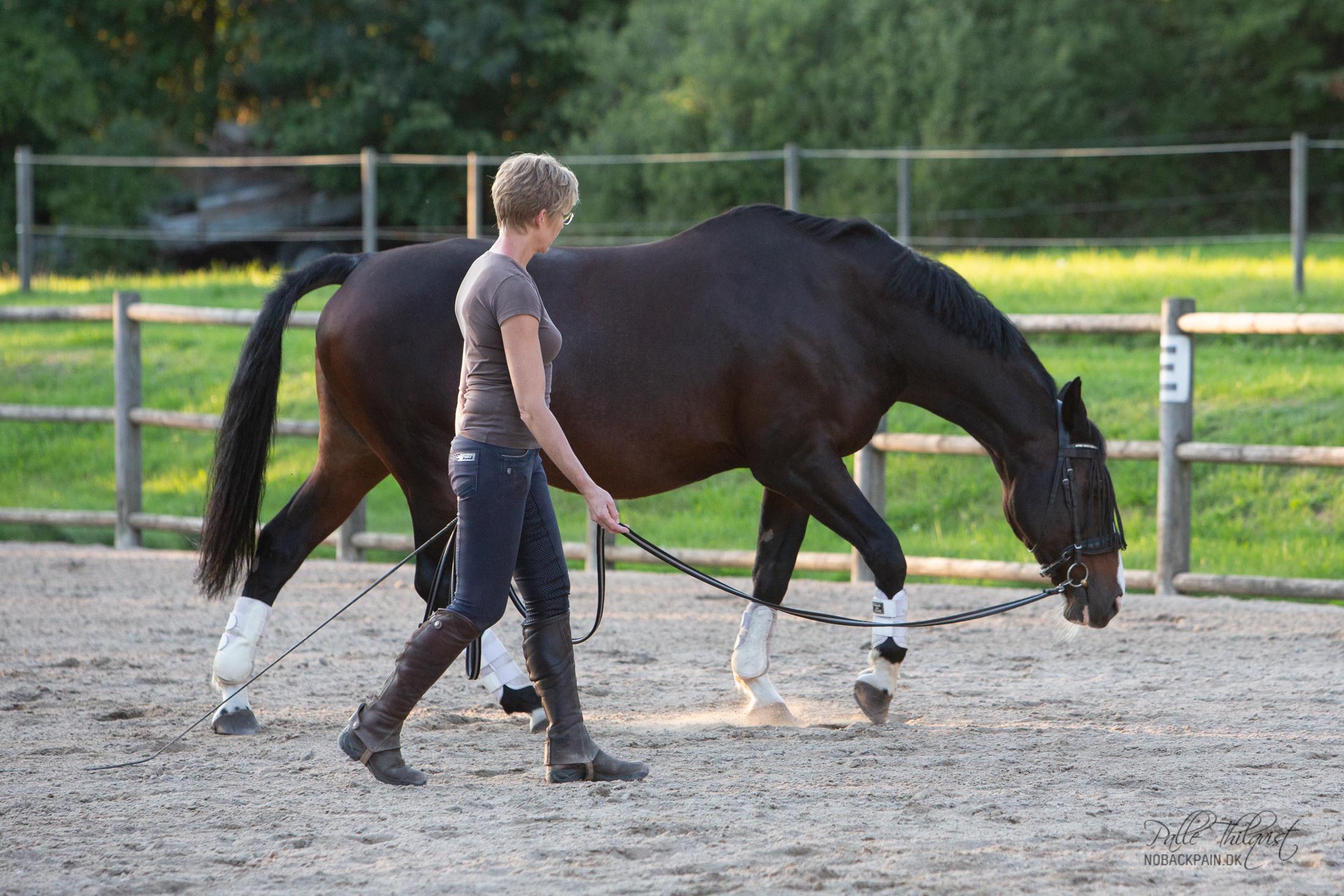 """Her ses Regitse på 20 år. Selvom hun nu pga meget springning er lidt stivbenet, så har det stadig været muligt at """"bygge"""" hende rimelig godt op på 2 år."""