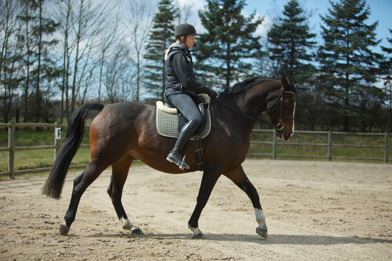 """Regitse som 15 årig. Da hun aldrig helt har fået den rigtige grunduddannelse """"taber"""" hun ryggen når hun rides op i en højere holdning. Man kan se hvordan forparten bærer det meste af vægten, uden dette dog er ekstremt."""