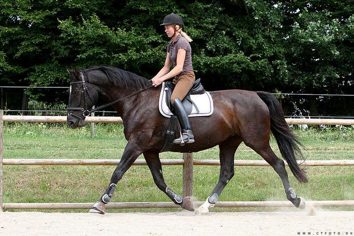 Her ses hvor stor en forskel det kan gøre, blot man lader hesten sænke nakken lidt og lade den strække hoved og hals en smule frem. Ryggen løftes, bagbenene kan bedre svinge ind under kroppen og hun er ikke nær så meget på forparten som på det forrige billede.