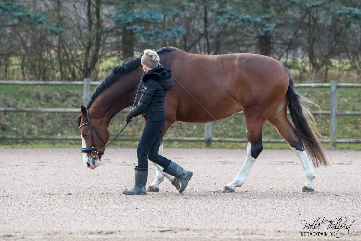 Det har rigtig stor betydning at få forberedt hesten ordentligt inden man begynder at ride den