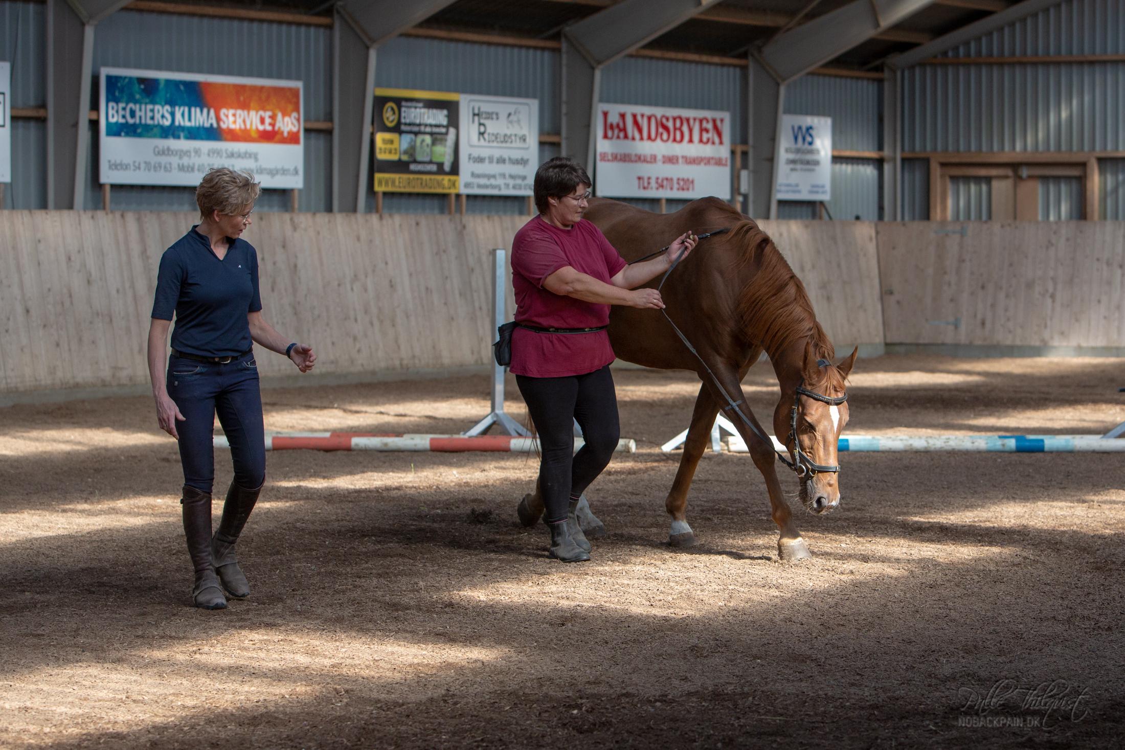 Allerede da Jane og Pro havde deres første lektion, begyndte Pro at strække sig helt ned til jorden indenfor de første 10 minutter... Jane vil få brug for nogle længere tøjler med denne hest :D