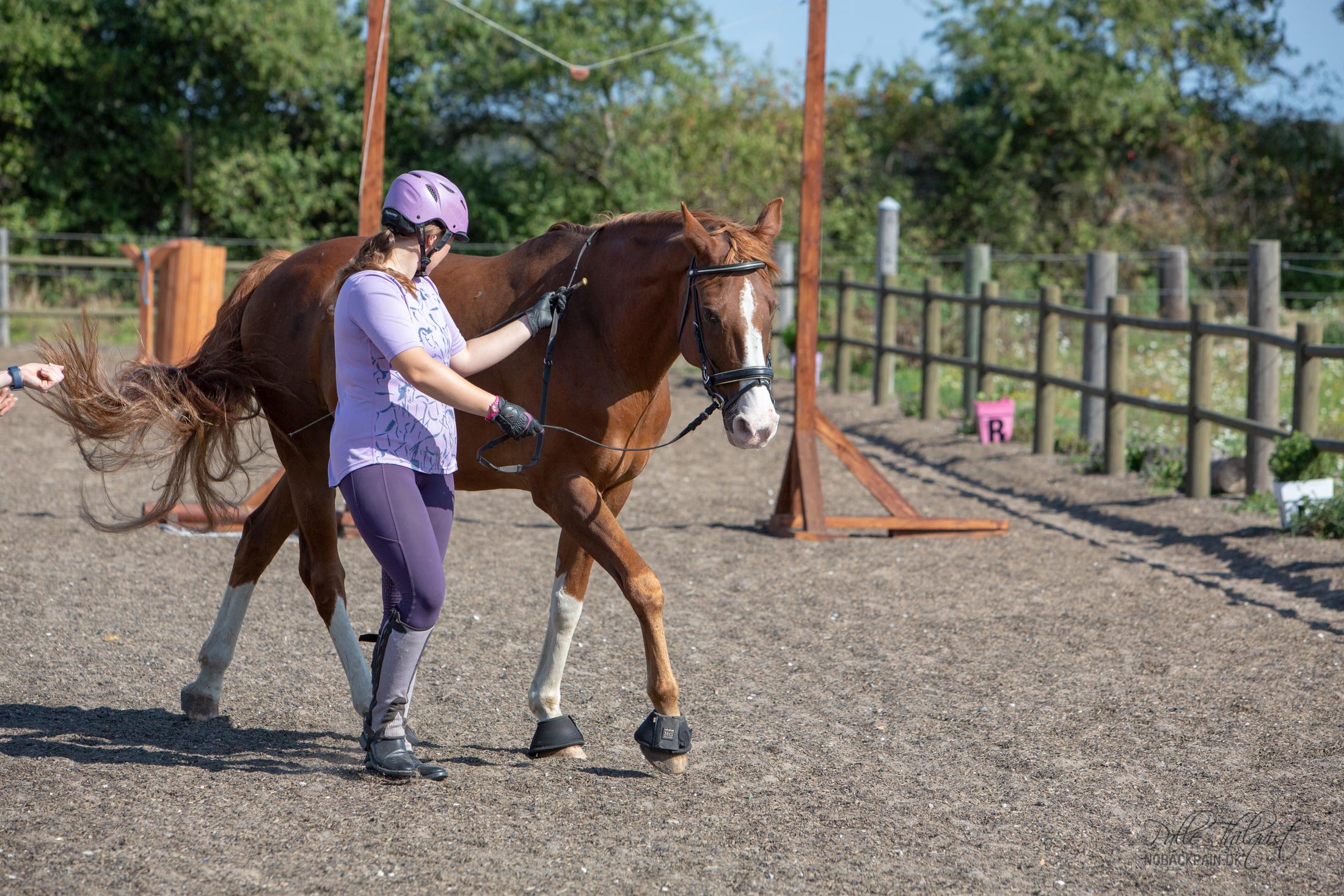 Sasha og Ripasso´s første lektion i arbejdet for hånd. Sasha holder øje med hvor Ripasso sætter det indvendige bagben.