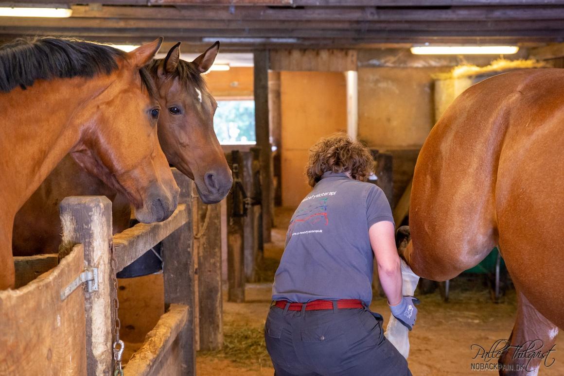 Hestefysioterapeut Charlotte Ravnbo har fået tilskuere på