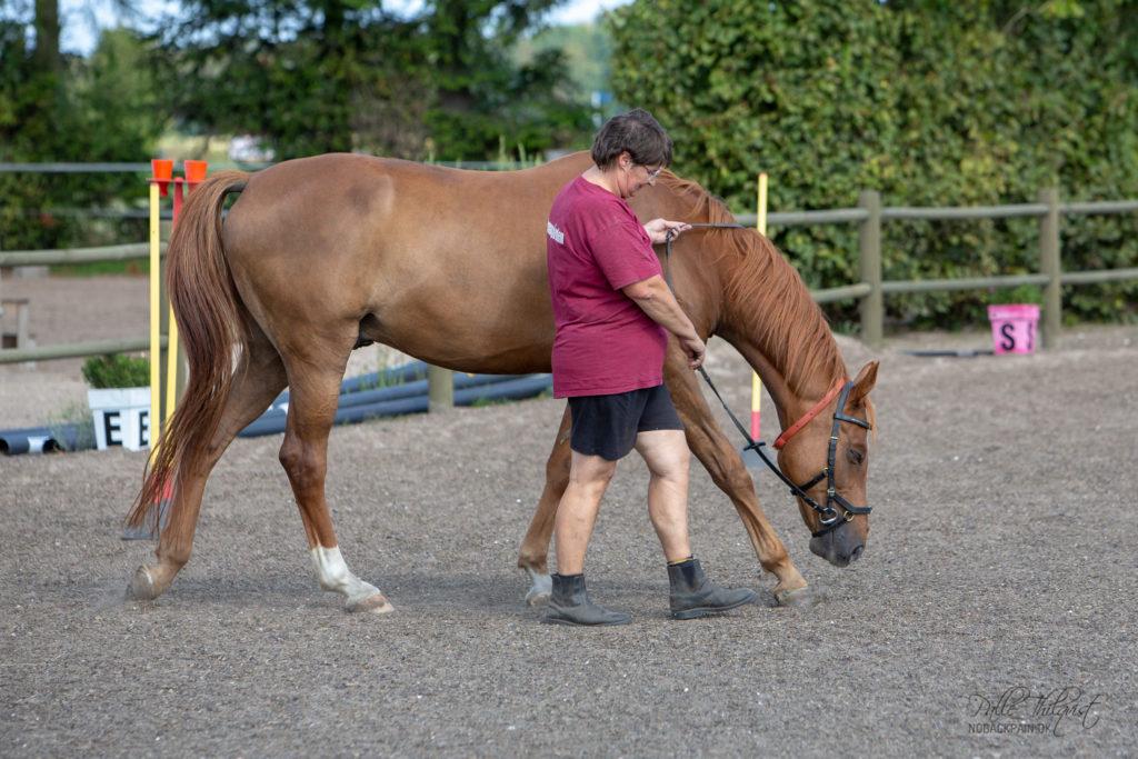 Jane Petersen og hendes hest Pro