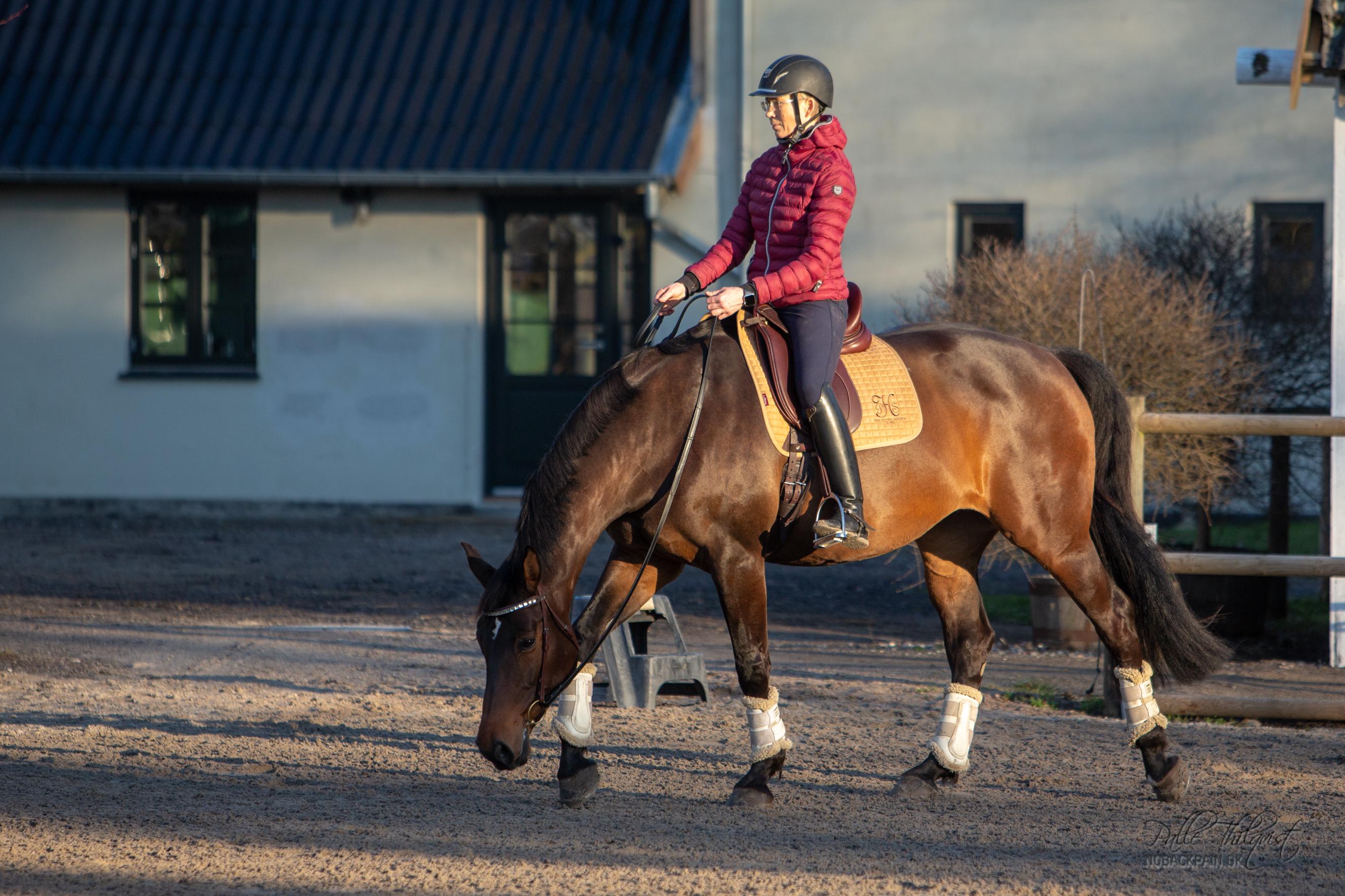 Hesten skal altid, uanset niveau, kunne strækkes næsten til jorden.