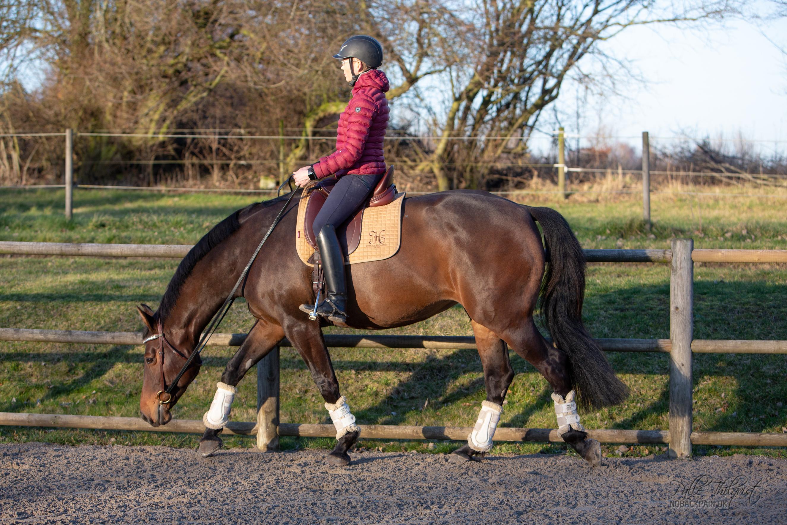 Man kan næsten på dette billede fornemme at tøjlerne er nødt til at være længere end normalt, når hesten strækker sig så dybt.
