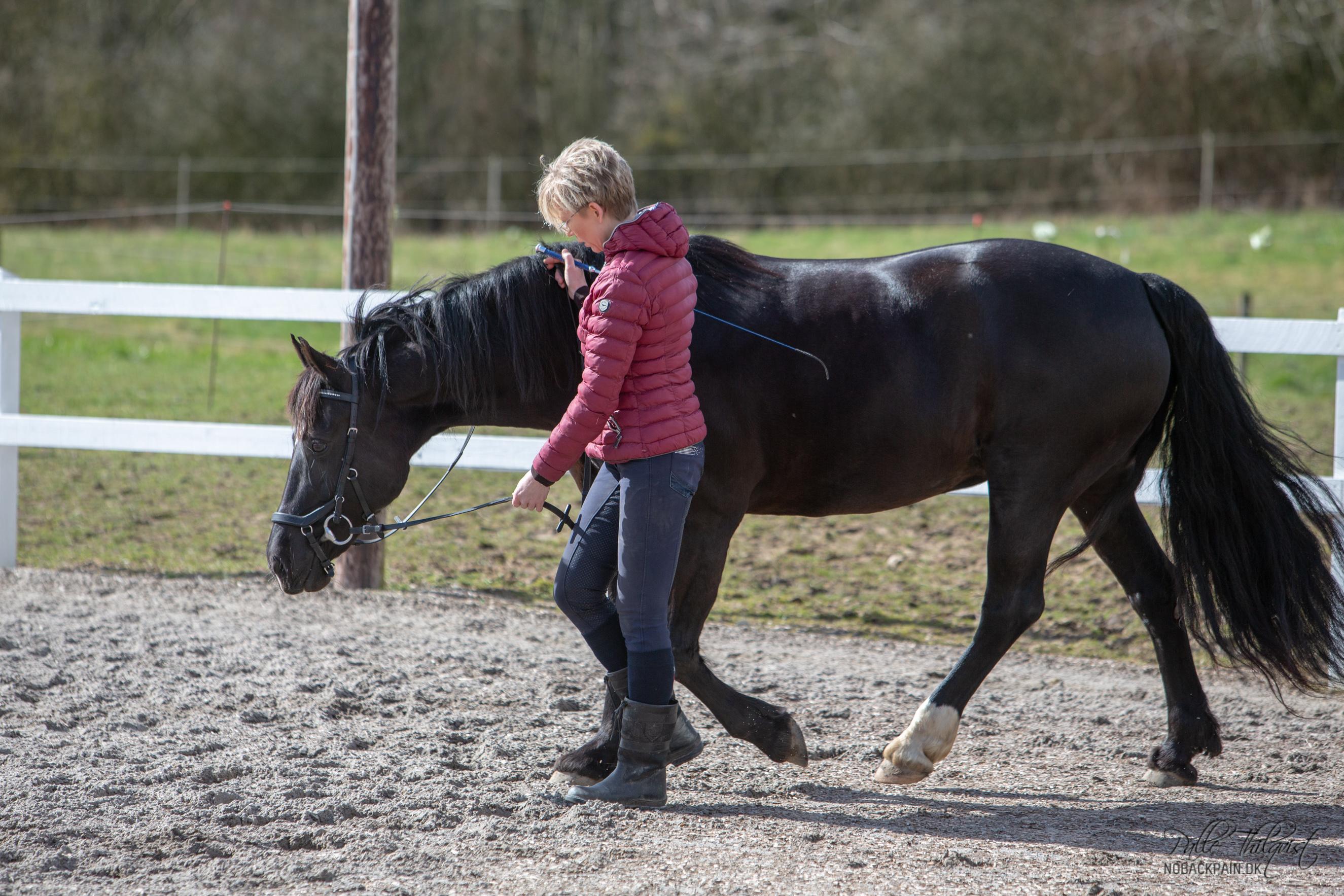 Rowina er en hest der har haft givet sin ejer store problemer i ridningen. Ved første øjekast ser Rowina jo fin og stærk ud. Men prøv at lægge mærke til hvordan ryggen hænger lidt, i det område hvor den bagerste del af sadlen ville hvile. Når en rytter sætter sig op vil ryggen sænkes endnu mere i dette område. Det vil da blive meget svært for Rowina at bevæge sig komfortabelt. Specielt hvis hun samtidig bliver bedt om at gå i en højere holdning. Rowina skal lære at bevæge sig frem med en løftet ryg. Dette opnåes ved at træne hende fra jorden, mens hun strækker sig dybt og bevæger sig aktivt frem. Når hun kan dette, så kan ridningen påbegyndes.