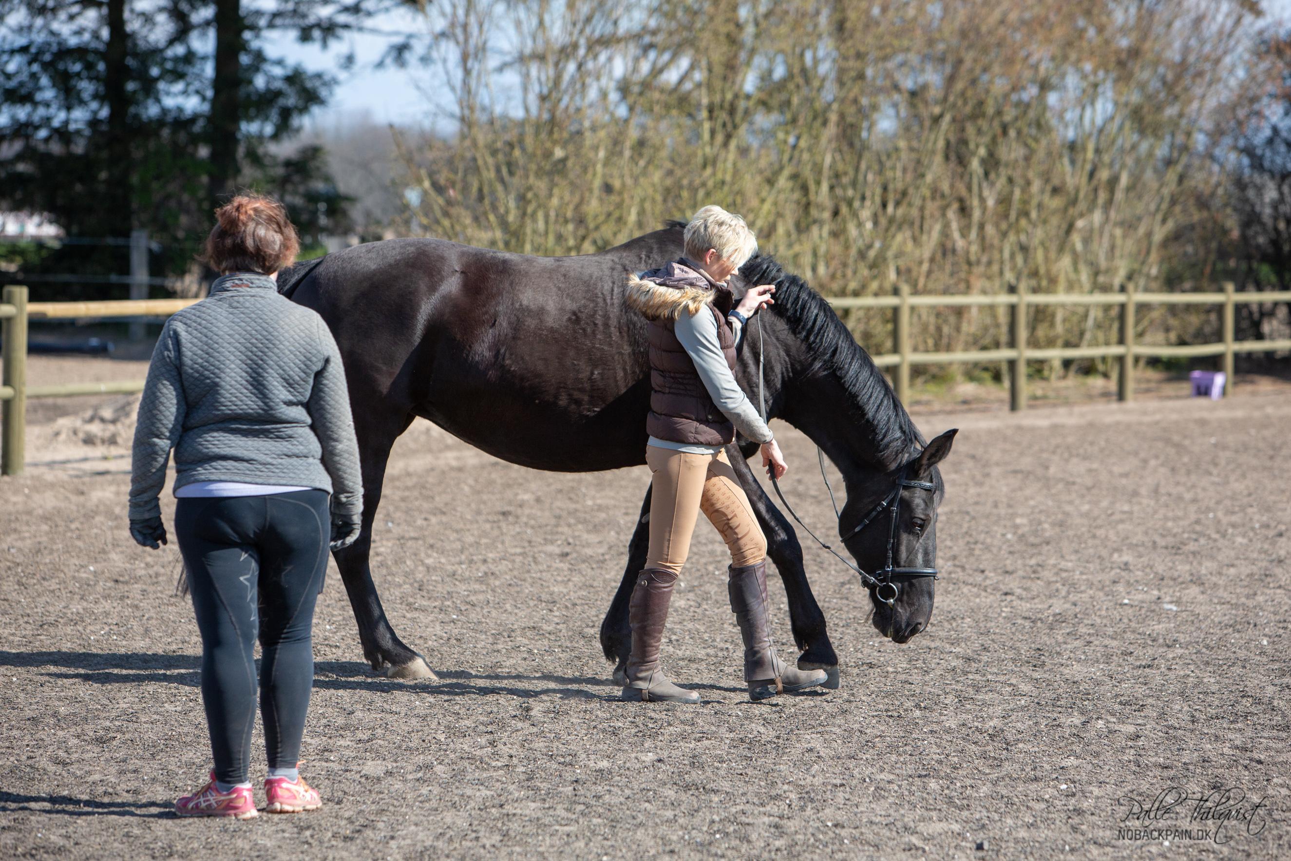 Sally er 9 år og har ikke været trænet særligt meget i sit liv. Der er ingen unaturlige fordybning i hendes overlinje, men hun mangler muskulatur. Man kan se at hele ryggen hænger en smule. Hvis man begynder at ride hende inden hun har lært at arbejde med ryggen oppe og inden hun har fået lidt mere muskulatur, så vil hun sænke ryggen endnu mere. Dette er ikke en hest der vil tage lang tid at bygge op, for der er ingen direkte problemer med hendes overlinje. Hun er bare ikke trænet og styrket endnu.