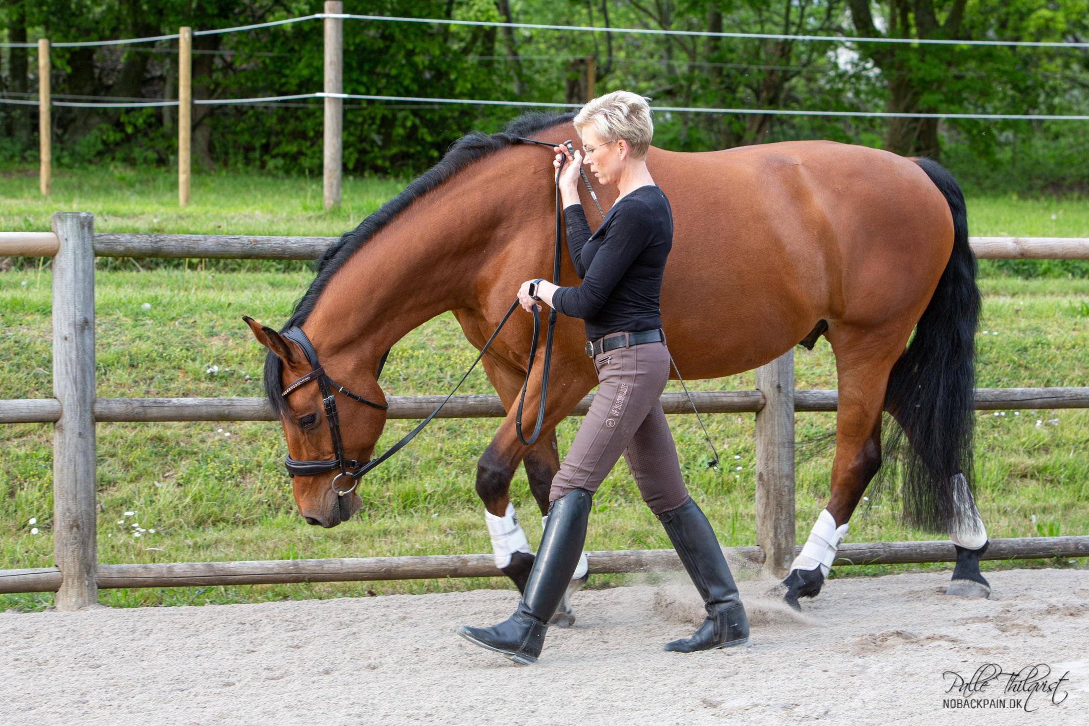 Du får hesten til at gå frem med et lille tap fra pisken der hvor schenklen ville have været placeret. Reagerer hesten ikke giver du et lidt kraftigere signal med pisken eventuelt forstærket med stemmen. Vær opmærksom på at du ikke holder fast i tøjlerne samtidig med at du bruger pisken. Vi må ikke forvirre hesten ved at bede den om at gå frem for pisken, samtidig med at vi holder fast i tøjlerne. Så pisk uden tøjle - tøjle uden pisk!! Med nogle heste er man nødt til at give tøjlerne helt, med andre er det nok bare at åbne hænderne lidt. Men start med at give tøjlen, hvis det er første gang du prøver.