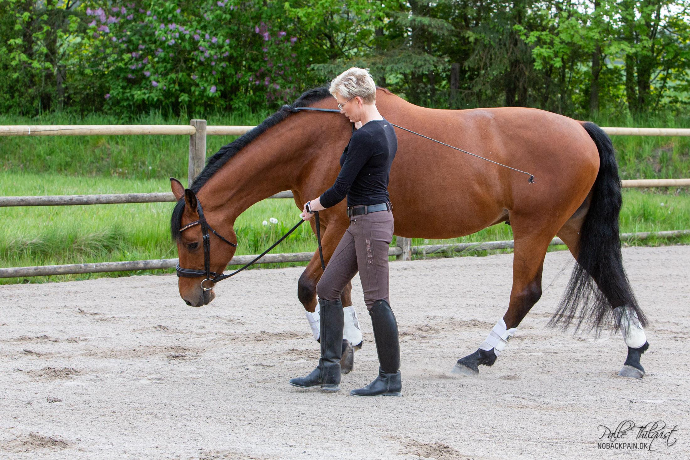 Formålet med at få hesten til at træde ind under tyngdepunktet er at få den til at strække hele sin overlinje. Hesten vil nu begynde at sænke hoved og hals ned og frem. Dette sker når man finder den rette kombination af fremdrift, indundertrædning og afslappethed. Det er her det for mange bliver lidt svært, men jeg skal prøve at forklare, så godt som muligt hvad det er jeg gør.
