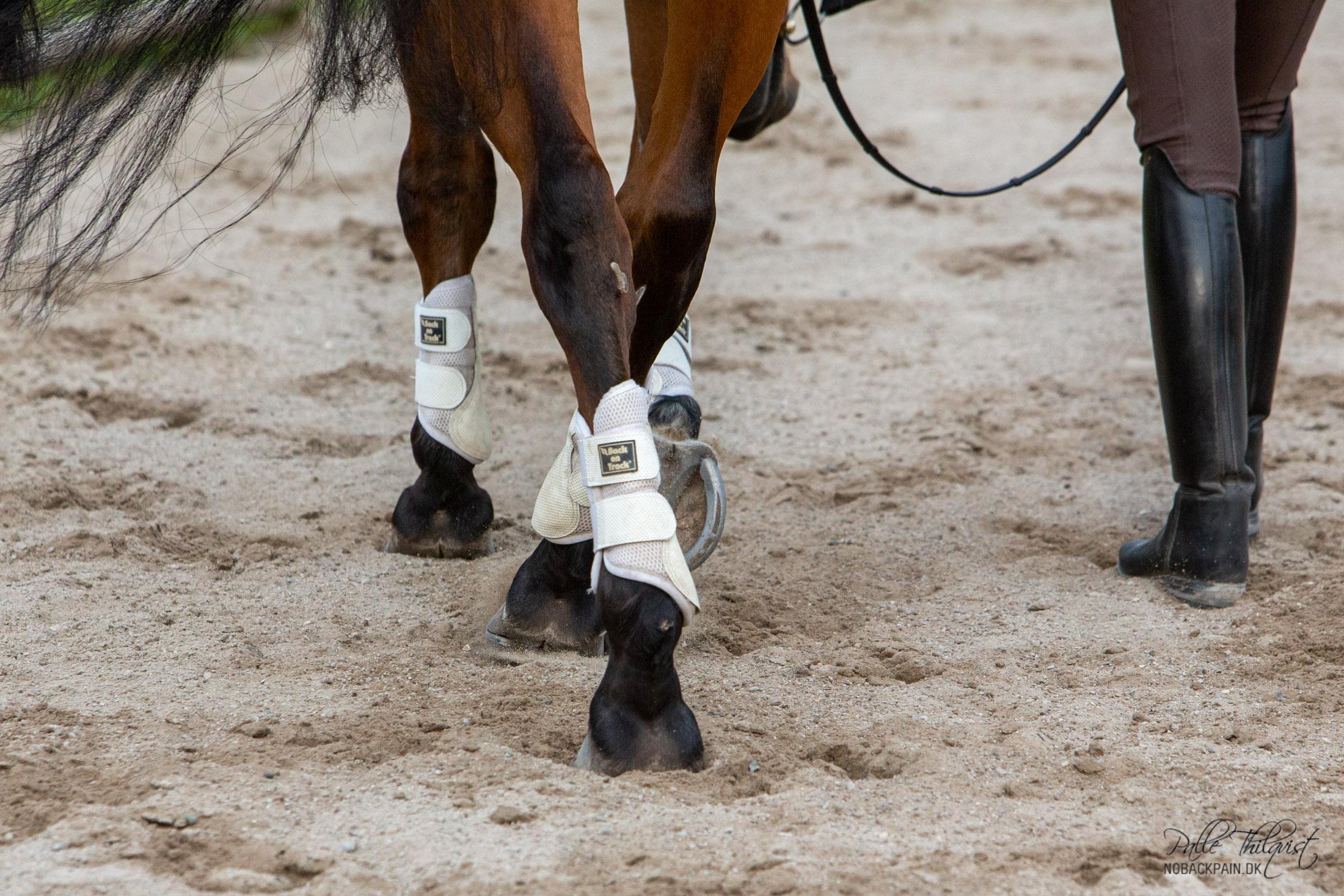 Nu begynder arbejdet!! Vi skal have hesten til at træde ind under tyngdepunktet med det indvendige bagben. Hesten skal sætte det indvendige bagbens hov ind imellem forhovenes spor.