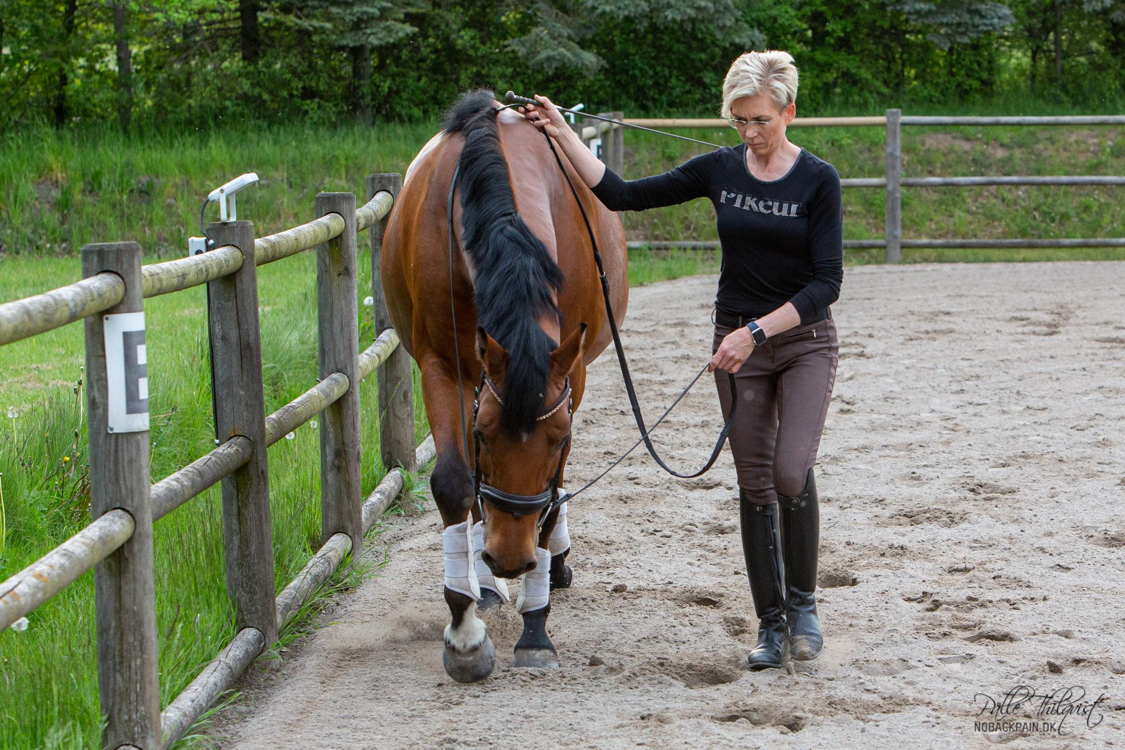 Så længe hesten går i det ønskede tempo, rører du den ikke med pisken.