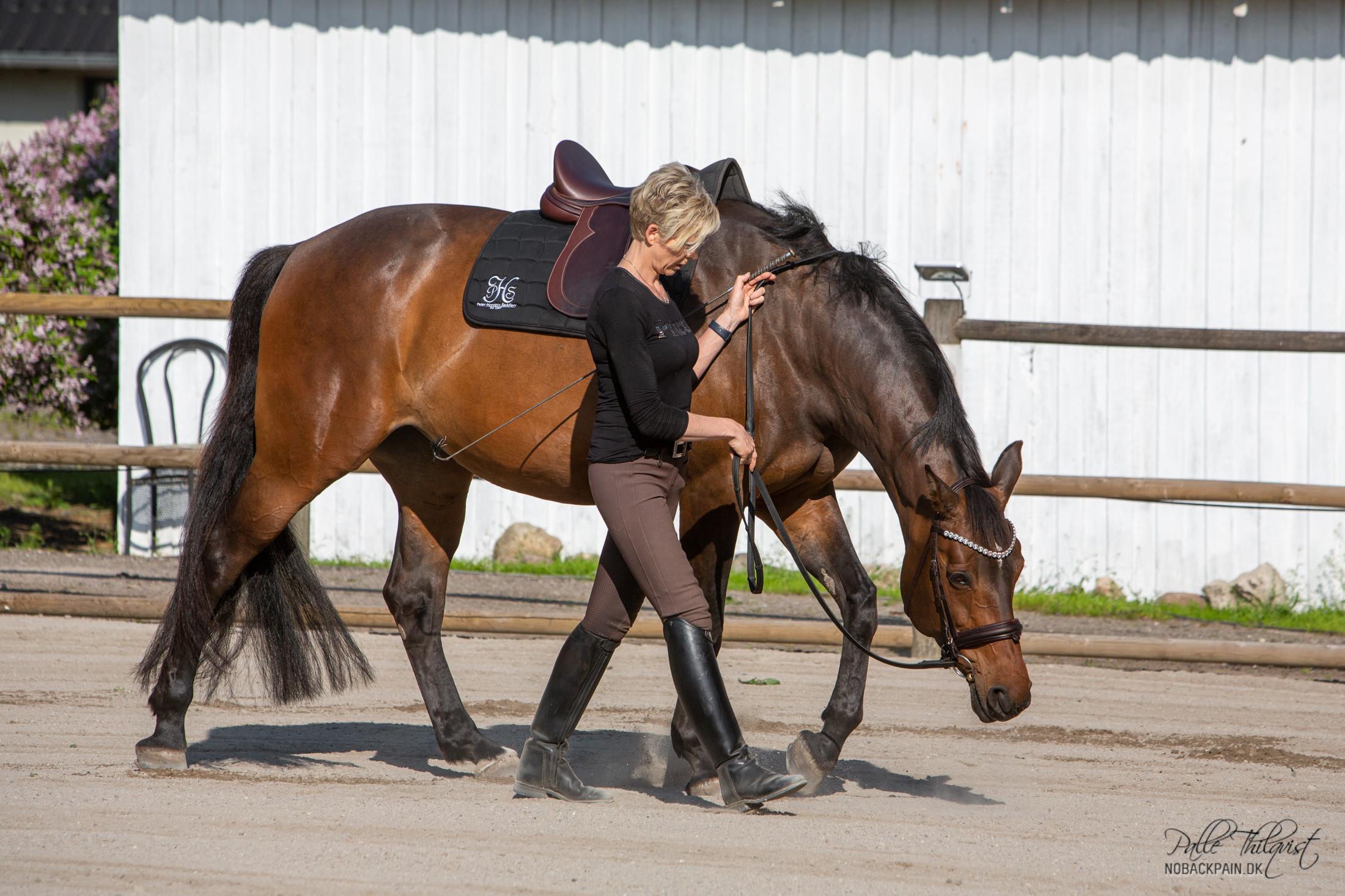 Det afhænger lidt af hesten hvad der nu er den bedste fremgangsmåde. Når man går rundt på cirkelvolten, så vil nogle heste meget hurtigt begynder at træde ind under tyngdepunktet når man rører dem pisken, hvis man samtidig er god til at kombinere det med den rette kontakt på den udvendige tøjle. Sker dette skal man være hurtig til at få givet længere tøjler når man fornemmer at hesten begynder at strække sig. Med nogle heste vil det i starten være effektivt at give tøjlerne fuldstændigt, når man mærker at den vil strække sig. Dette vil hesten opfatte som en belønning... Lad vær med at trække ned i den indvendige tøjle for at få hesten til at strække sig!! Og undlad også at trække indad i den indvendige tøjle.... Nogle bruger pisken kraftigt, for at få hesten til at træde sidelæns samtidig med at de har en fast kontakt på den udvendige tøjle. Dette bryder jeg mig heller ikke om. Flere af de heste jeg kommer ud til ville blive alt for anspændte ved den fremgangsmåde.