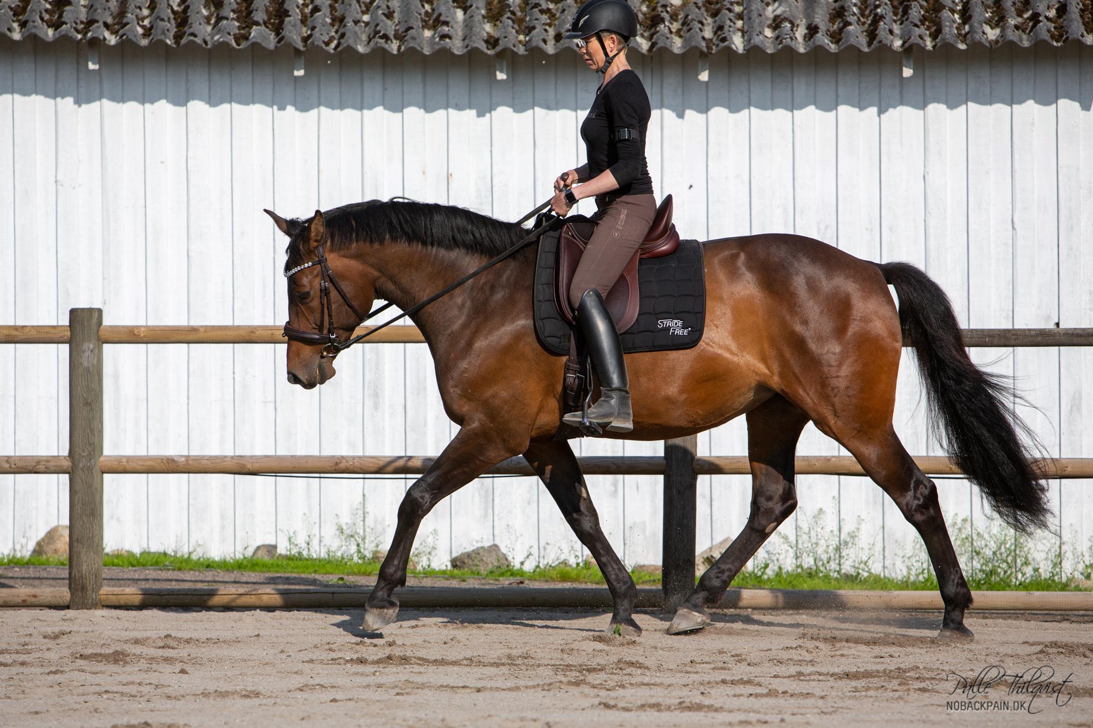 Amaze I arbejdstrav. Uanset hvilken holdning hesten går i så skal den arbejde taktfast og afslappet.