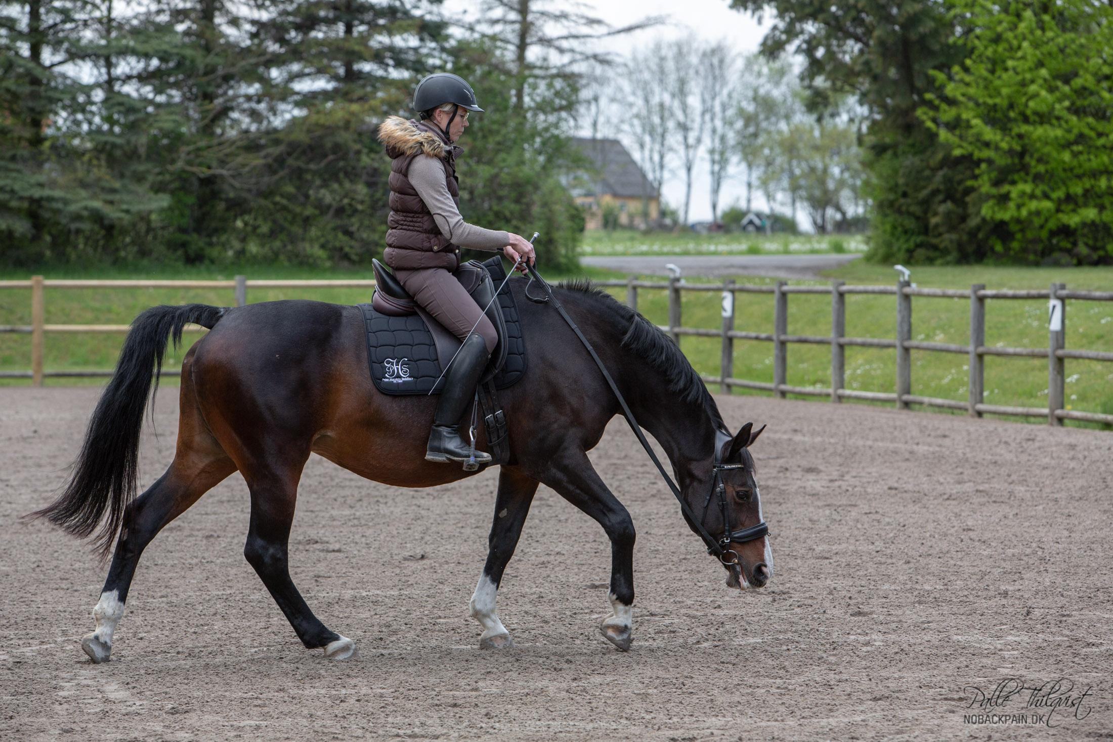 Regitse mens hun strækker sig dybt. Det tager lang tid at rette op på en hest der har brugt sig selv forkert i mange år.