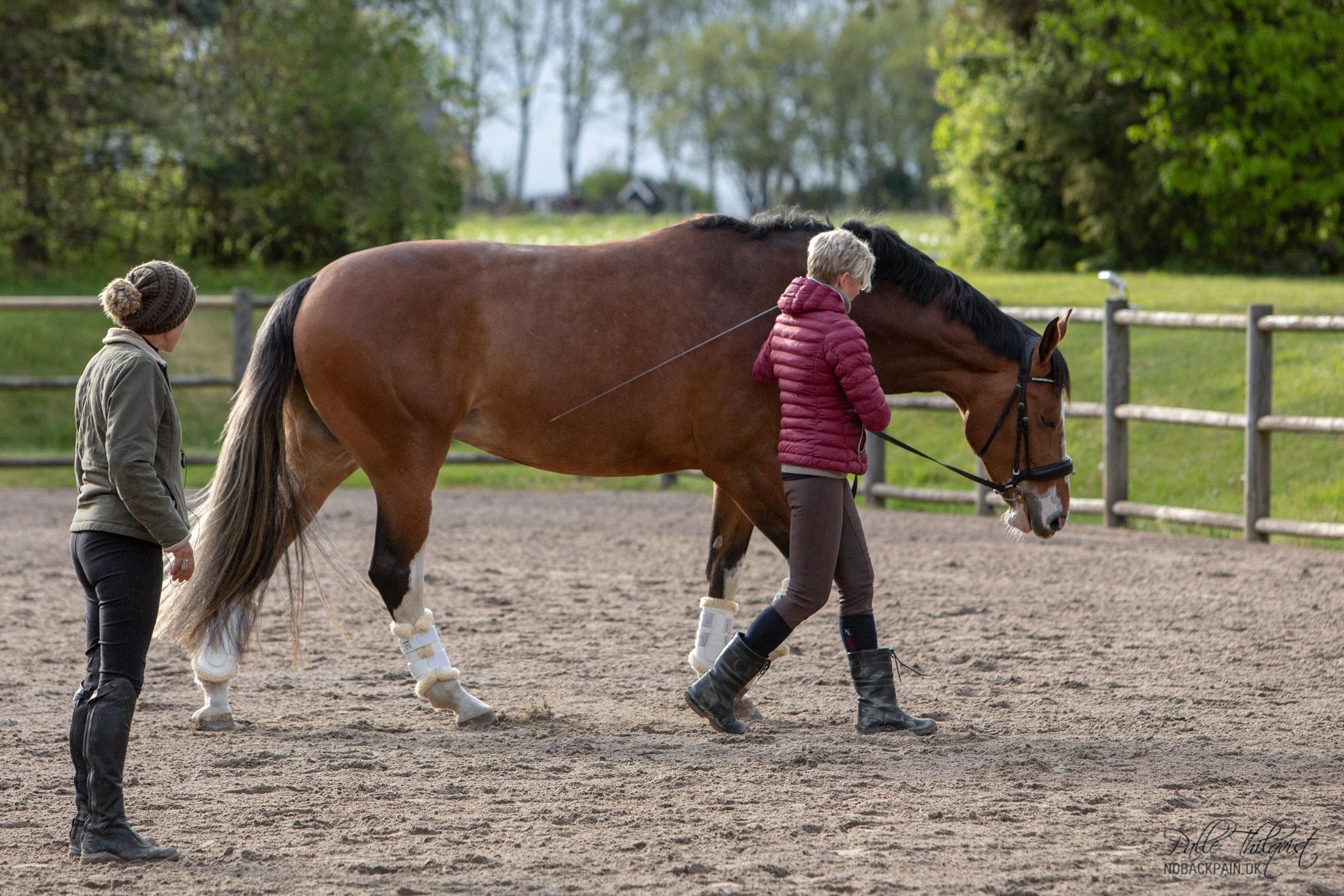 Lillepigen arbejdes for hånd. En god gammel metode til at forklare hesten hvad man vil have den til inden man begynder ridningen.