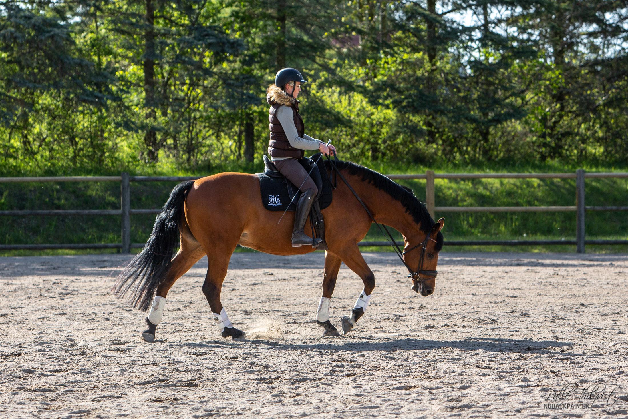 Noller i skridt mens han strækker sig dybt. Hesten kan godt være anspændt eller ude af takt selvom den strækker sig dybt. Men i de fleste tilfælde vil hesten begynde at slappe af når den strækker sig.