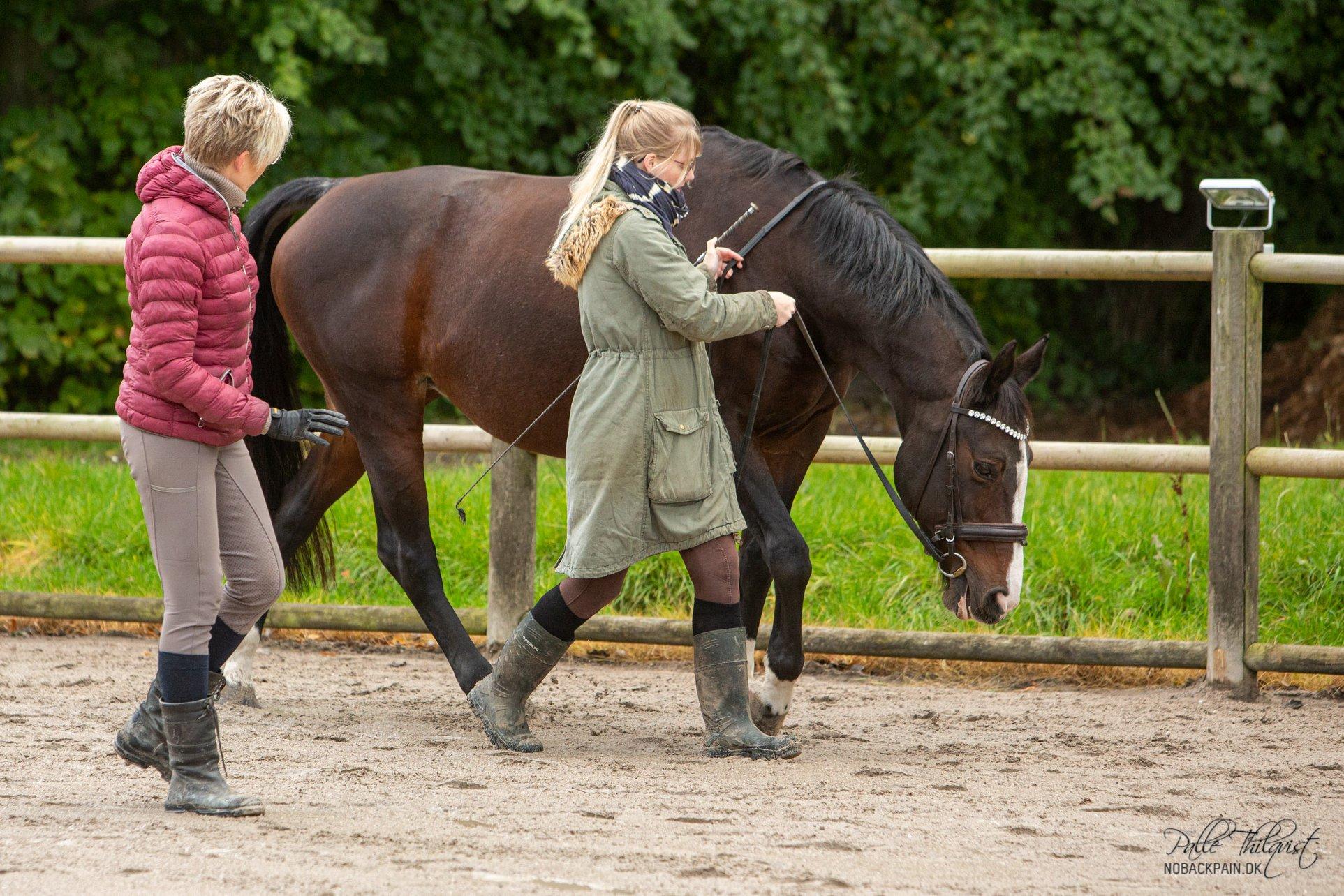 Hånden holdes i en opadgående retning indtil hesten begynder at tygge på biddet.