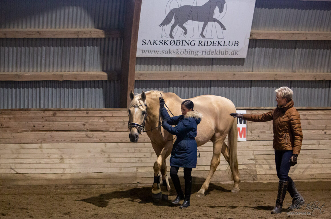 Man kan lære hesten mange ting via arbejdet for hånd, bla. at forstå biddets betydning.