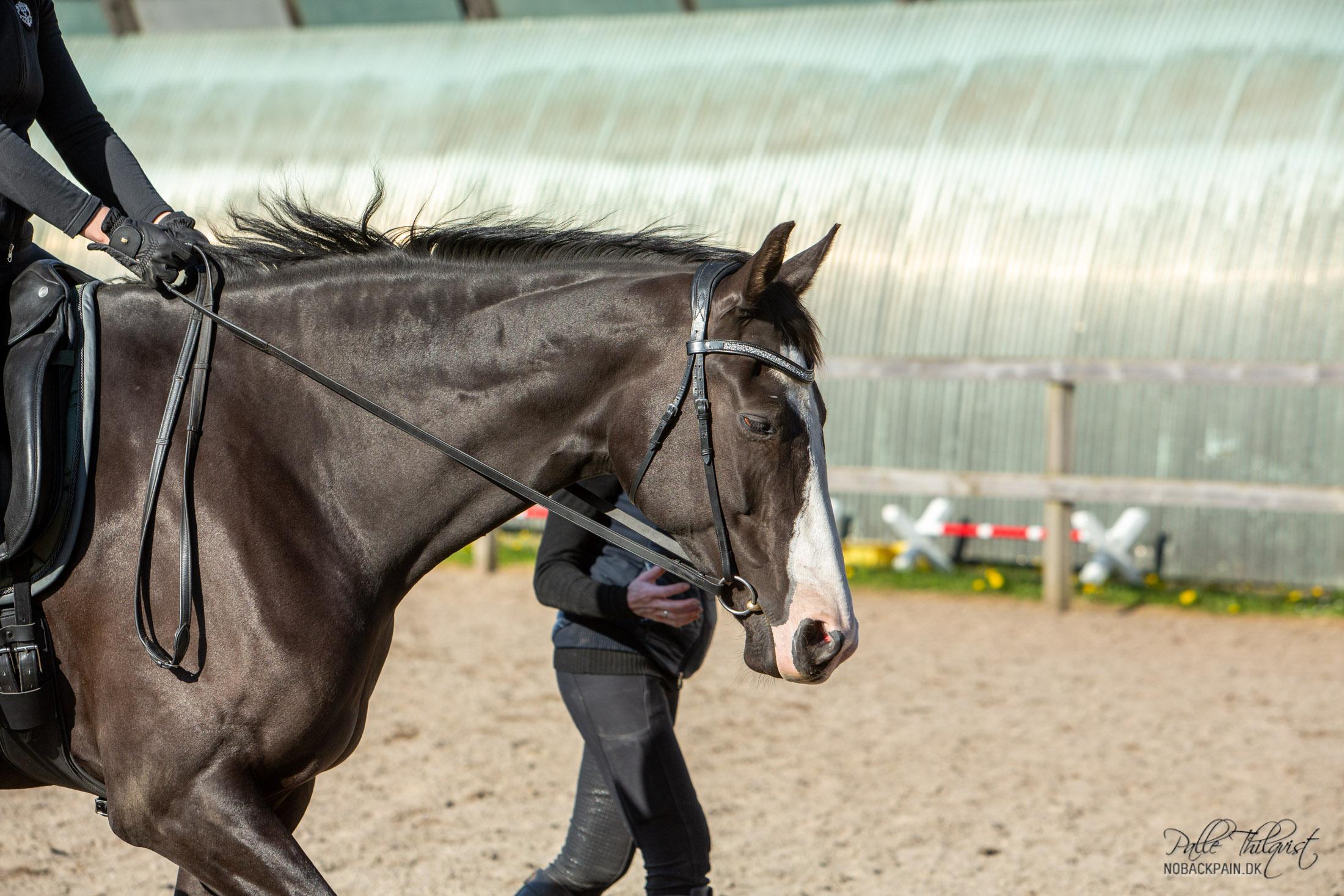 Det er vigtigt at hesten altid går foran lod. Indtil hesten har lært at bruge sin ryg korrekt og indtil bagbenene svinger afslappet ind under hesten, så er det vigtigt at hesten går MEGET foran lod. Med tiden når hesten får mere styrke, vil den helt naturligt komme tættere på lodplanet. Dog altid tydeligt foran lod og IKKE i lod.