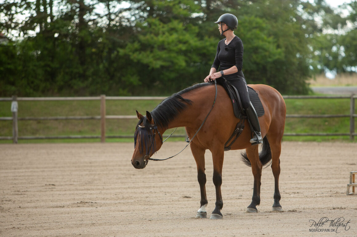 Lad hesten stå stille indtil den sænker hoved og hals